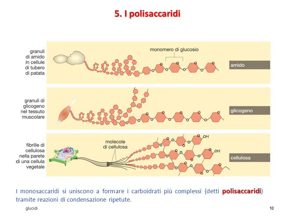 5. I polisaccaridi