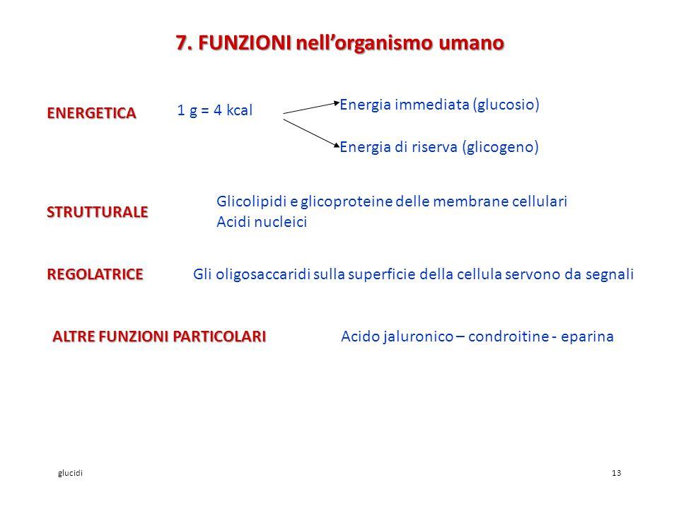 7. FUNZIONI nell'organismo umano