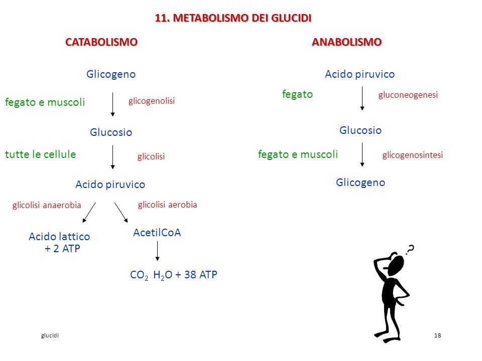 11. METABOLISMO DEI GLUCIDI