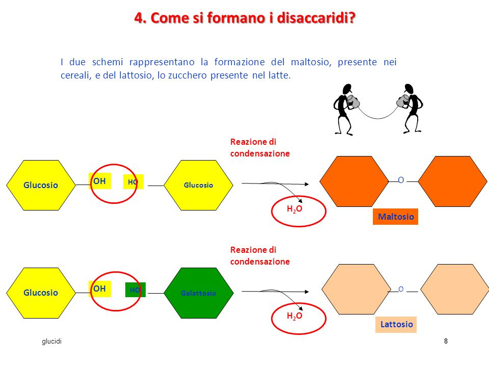 4. Come si formano i disaccaridi