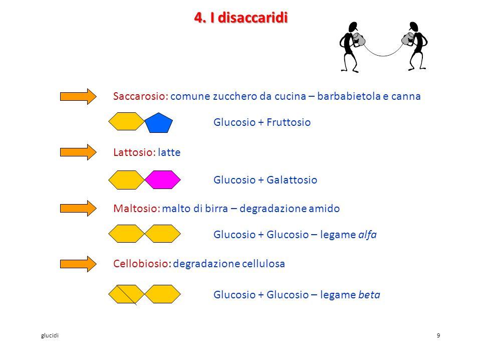 4. I disaccaridi Saccarosio: comune zucchero da cucina – barbabietola e canna. Glucosio + Fruttosio.