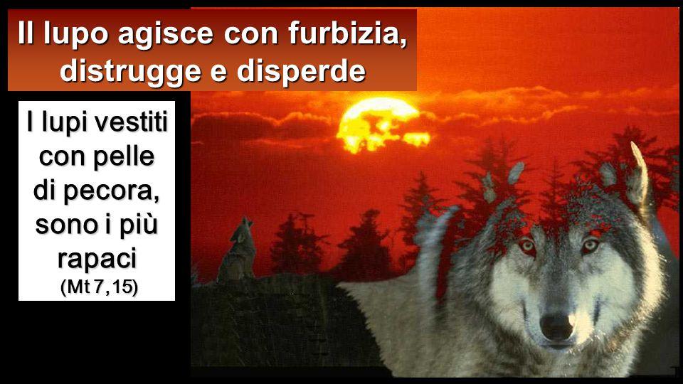 Il lupo agisce con furbizia, distrugge e disperde