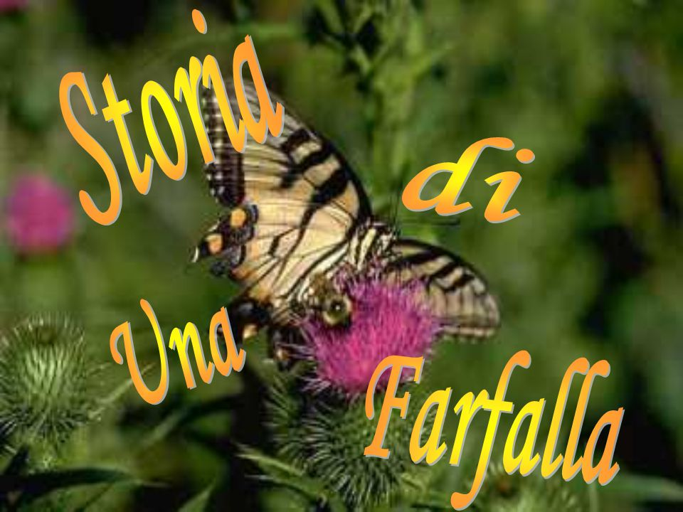 Storia di Una Farfalla