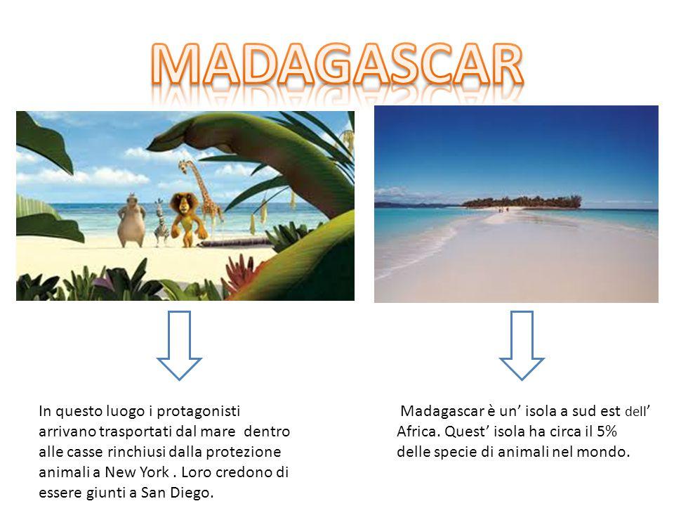 MADAGASCAR Il Madagascar è un isola che si trova a sud est rispetto all' Africa. Quest' isola ha circa il 5% delle specie di animali nel mondo