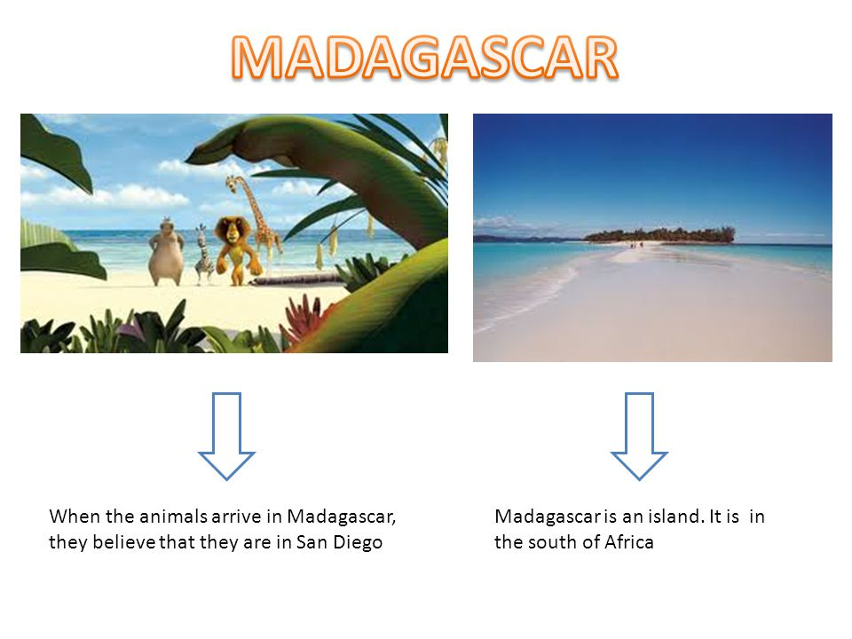 MADAGASCAR When the animals arrive in Madagascar, they believe that they are in San Diego.