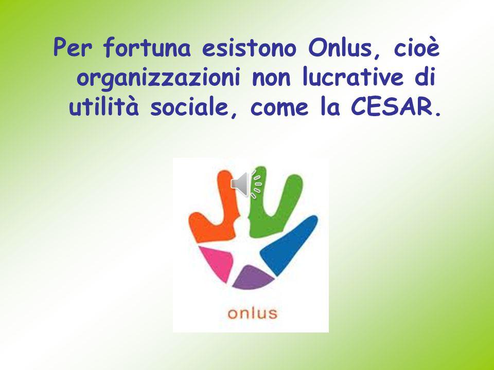 Per fortuna esistono Onlus, cioè organizzazioni non lucrative di utilità sociale, come la CESAR.