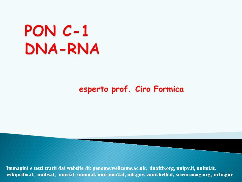 esperto prof. Ciro Formica