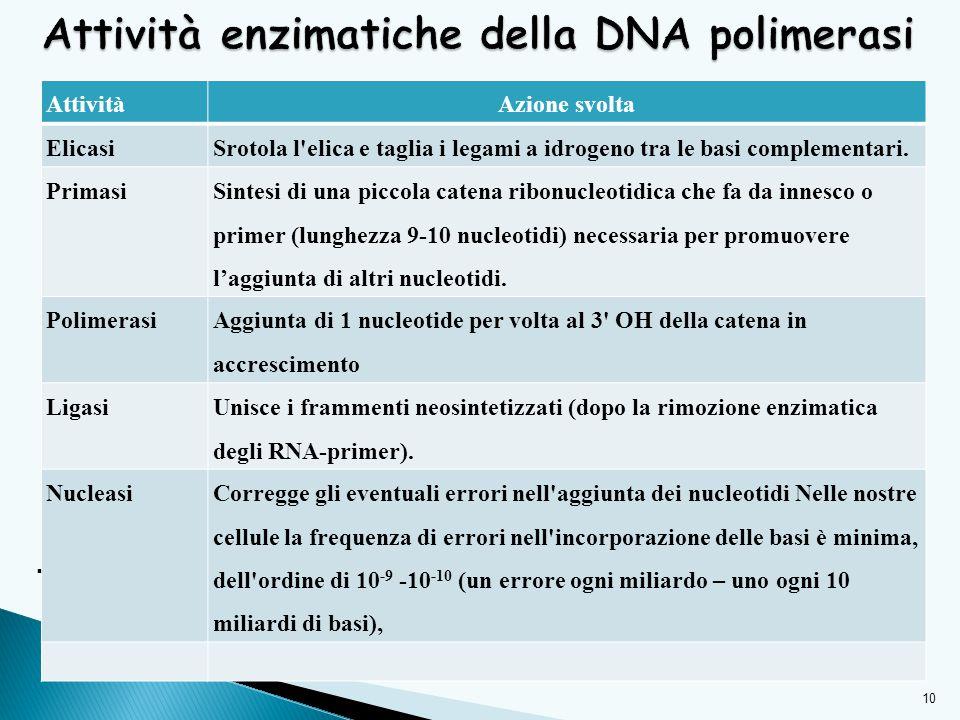 Attività enzimatiche della DNA polimerasi