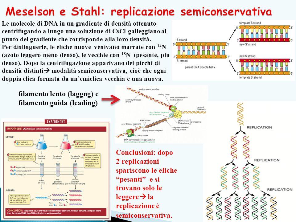 Meselson e Stahl: replicazione semiconservativa