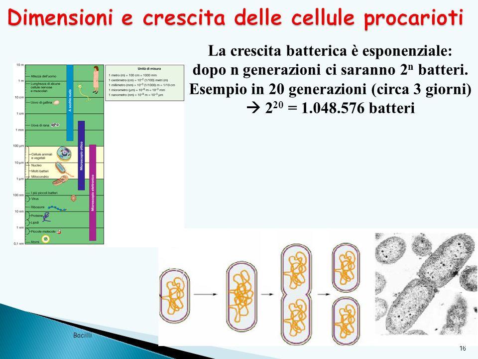 Dimensioni e crescita delle cellule procarioti