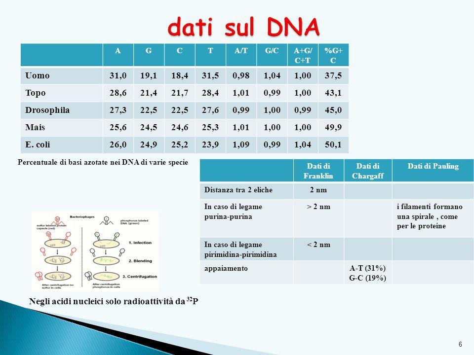 dati sul DNA A. G. C. T. A/T. G/C. A+G/C+T. %G+C. Uomo. 31,0. 19,1. 18,4. 31,5. 0,98. 1,04.