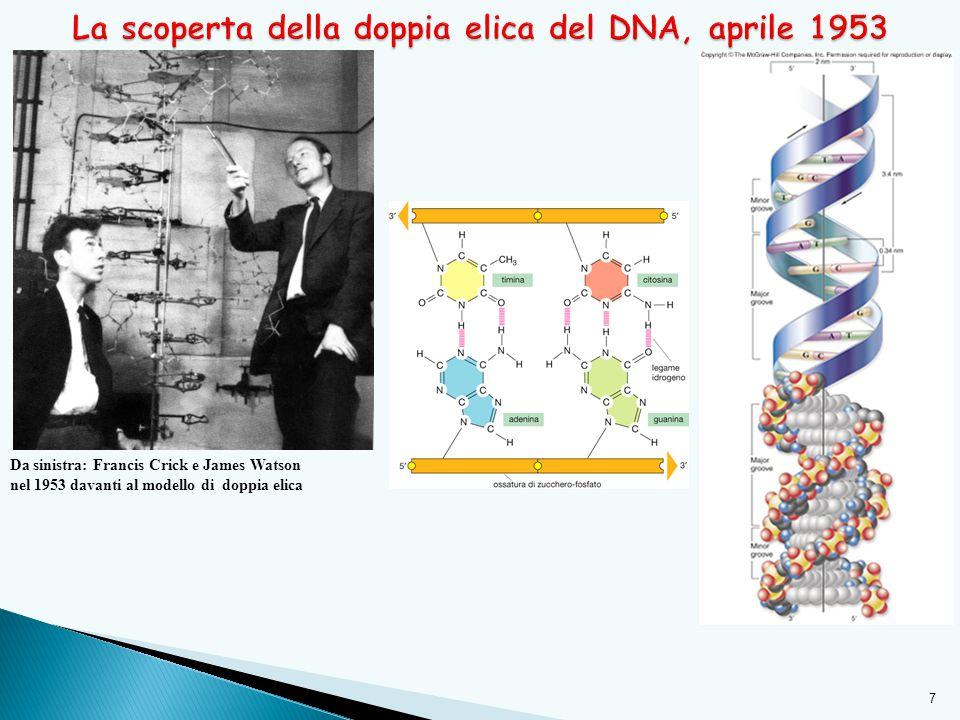 La scoperta della doppia elica del DNA, aprile 1953