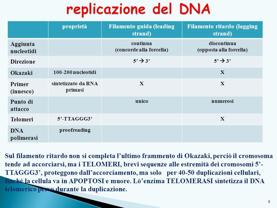 replicazione del DNA proprietà. Filamento guida (leading strand) Filamento ritardo (lagging strand)