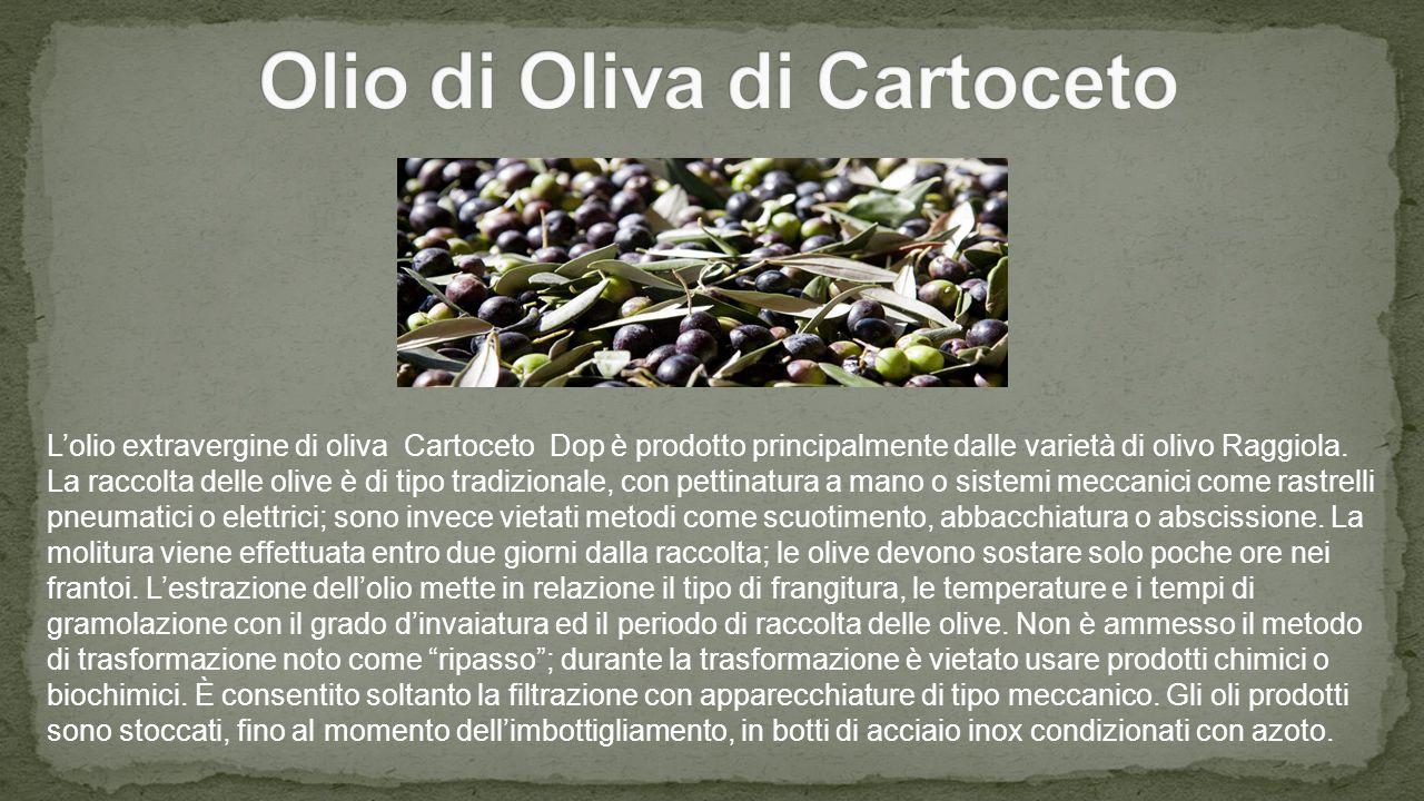 Olio di Oliva di Cartoceto