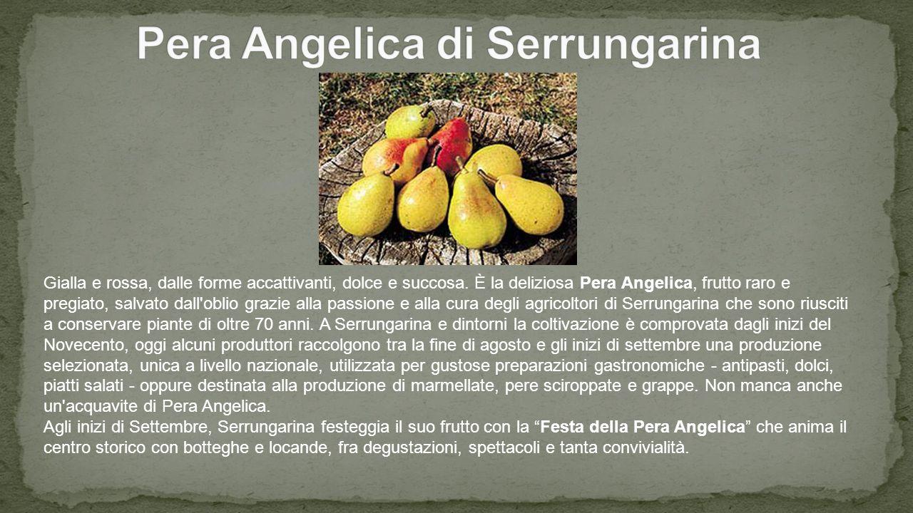 Pera Angelica di Serrungarina