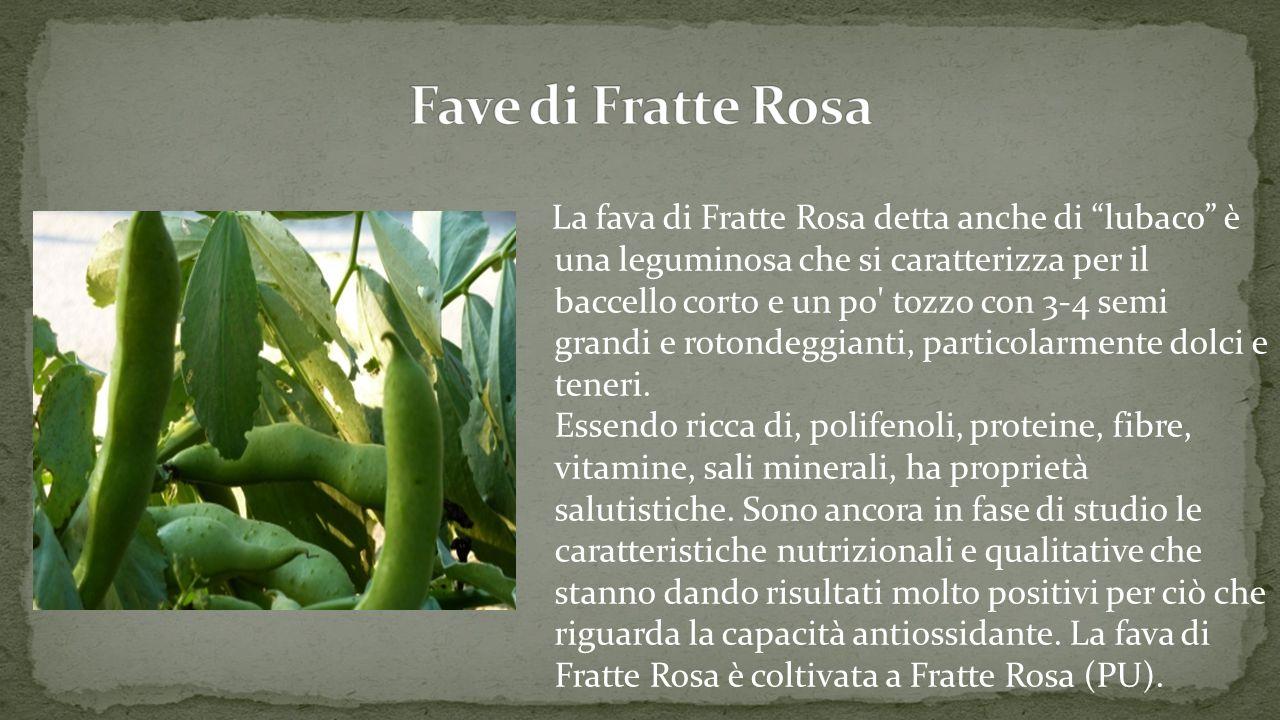 Fave di Fratte Rosa