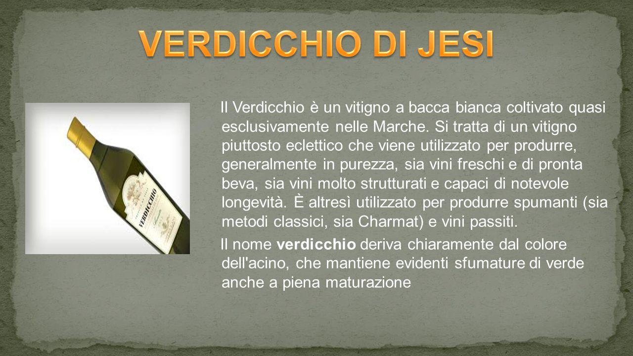 VERDICCHIO DI JESI