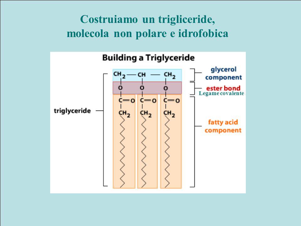 Costruiamo un trigliceride, molecola non polare e idrofobica