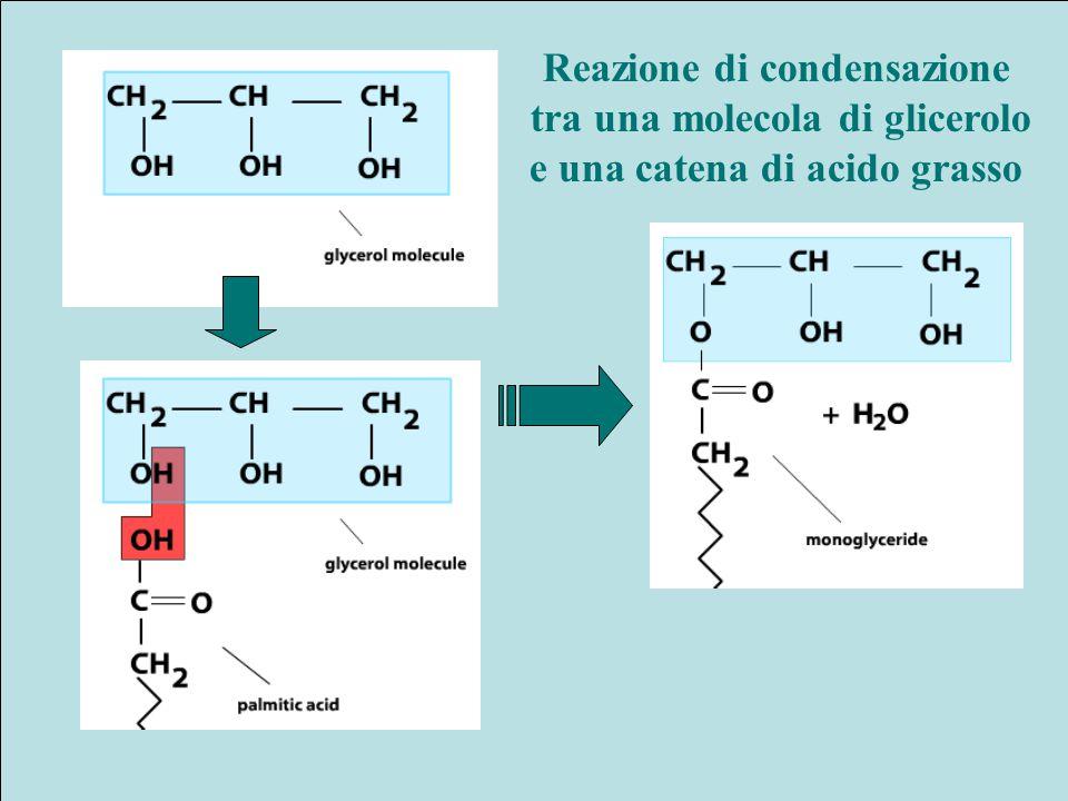 Reazione di condensazione tra una molecola di glicerolo