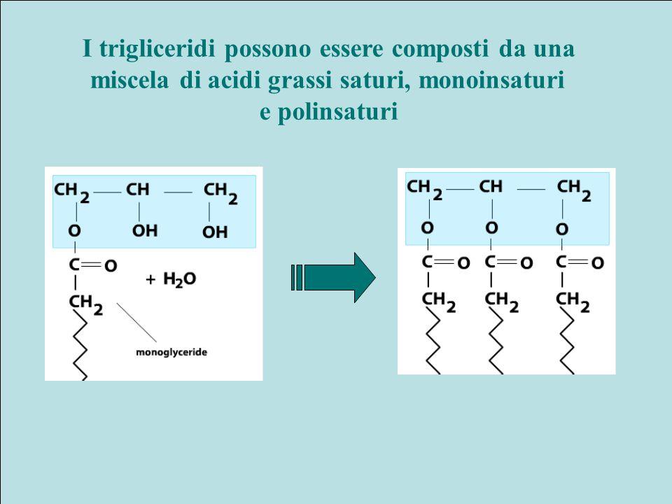 I trigliceridi possono essere composti da una