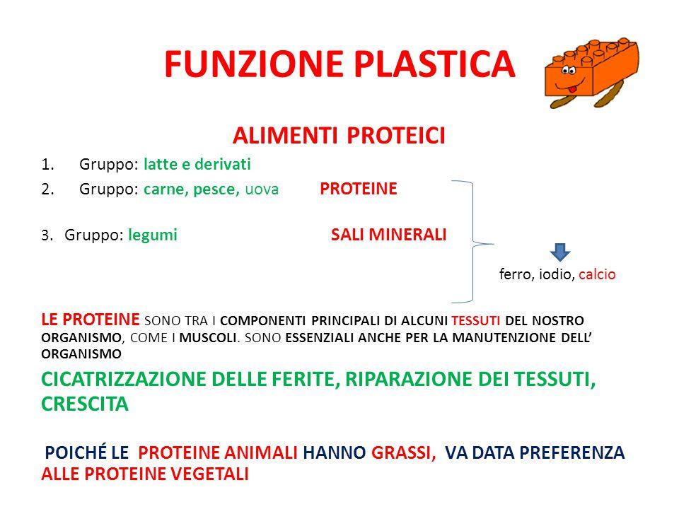 Funzione plastica Alimenti proteici