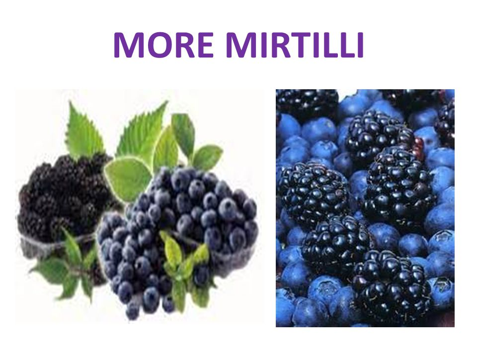 MORE MIRTILLI