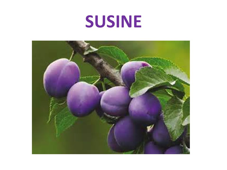SUSINE