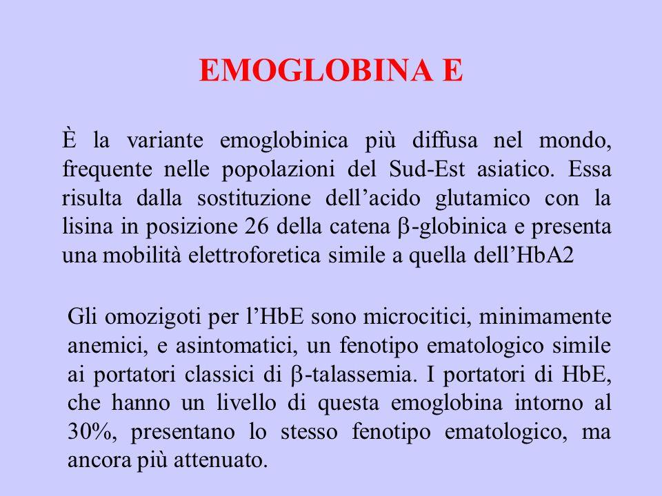 EMOGLOBINA E