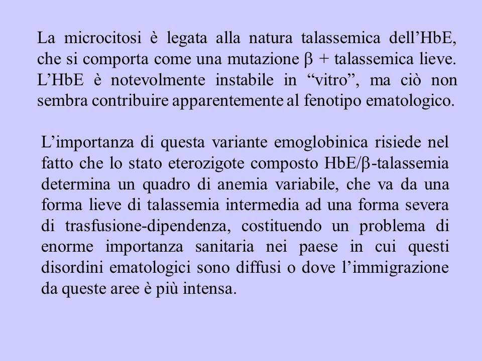 La microcitosi è legata alla natura talassemica dell'HbE, che si comporta come una mutazione b + talassemica lieve. L'HbE è notevolmente instabile in vitro , ma ciò non sembra contribuire apparentemente al fenotipo ematologico.