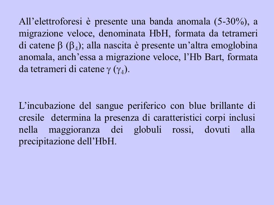 All'elettroforesi è presente una banda anomala (5-30%), a migrazione veloce, denominata HbH, formata da tetrameri di catene b (b4); alla nascita è presente un'altra emoglobina anomala, anch'essa a migrazione veloce, l'Hb Bart, formata da tetrameri di catene g (g4).