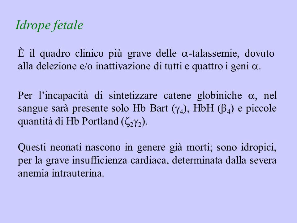 Idrope fetale È il quadro clinico più grave delle a-talassemie, dovuto alla delezione e/o inattivazione di tutti e quattro i geni a.