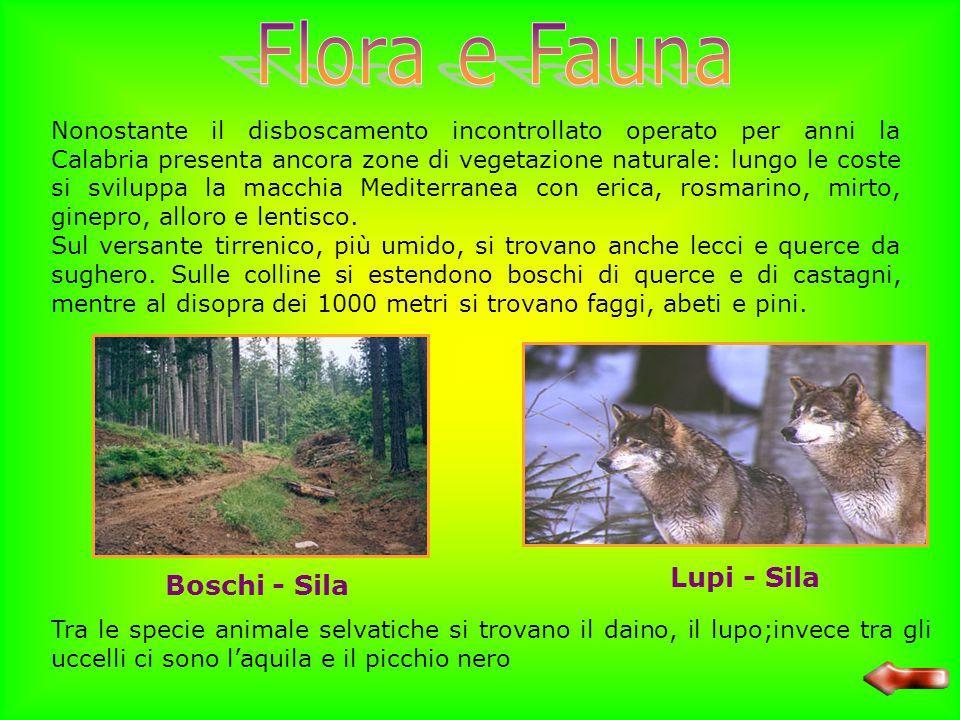 Flora e Fauna Lupi - Sila Boschi - Sila
