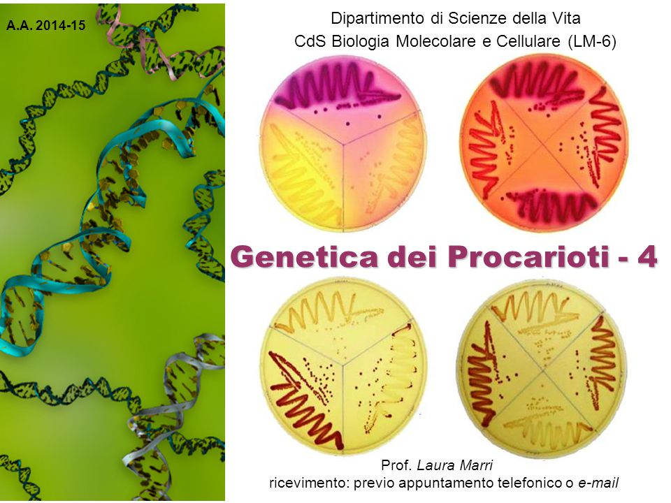 Genetica dei Procarioti - 4