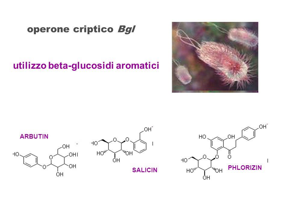 utilizzo beta-glucosidi aromatici