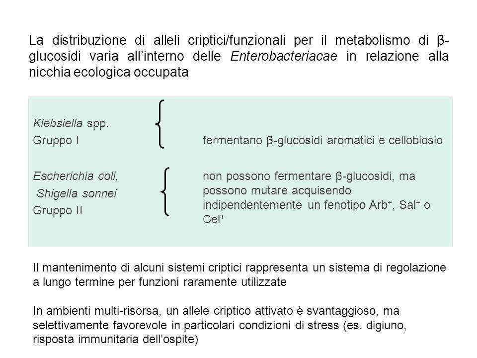 La distribuzione di alleli criptici/funzionali per il metabolismo di β-glucosidi varia all'interno delle Enterobacteriacae in relazione alla nicchia ecologica occupata