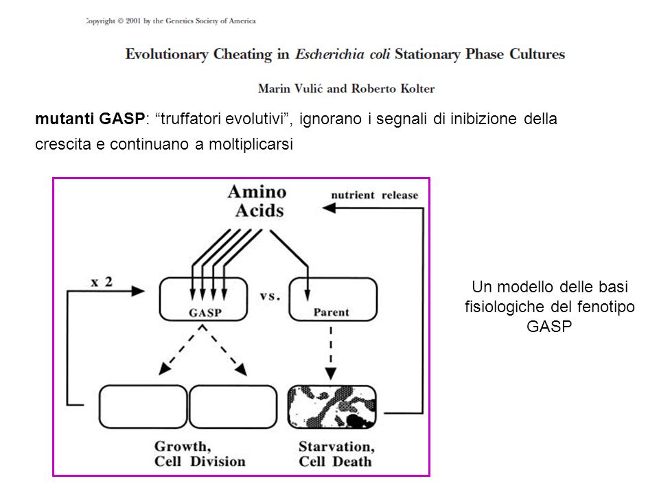 Un modello delle basi fisiologiche del fenotipo GASP