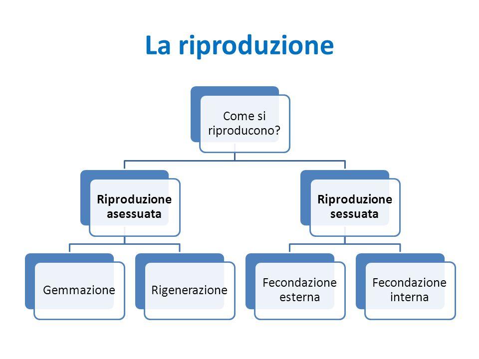 Riproduzione asessuata Riproduzione sessuata