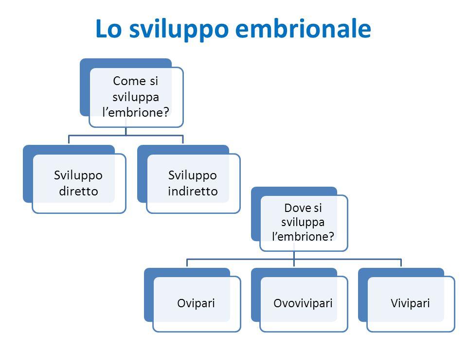 Lo sviluppo embrionale