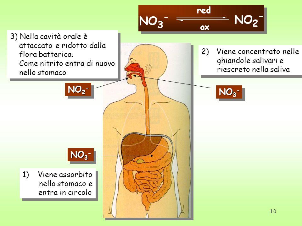 NO2- NO3- NO3- 3) Nella cavità orale è attaccato e ridotto dalla