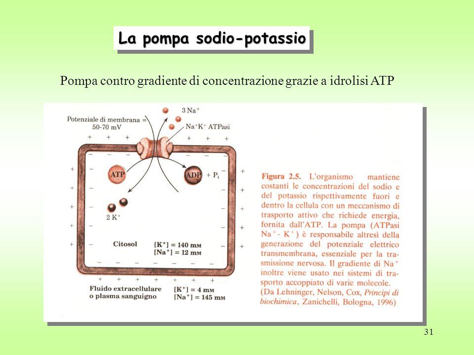 La pompa sodio-potassio