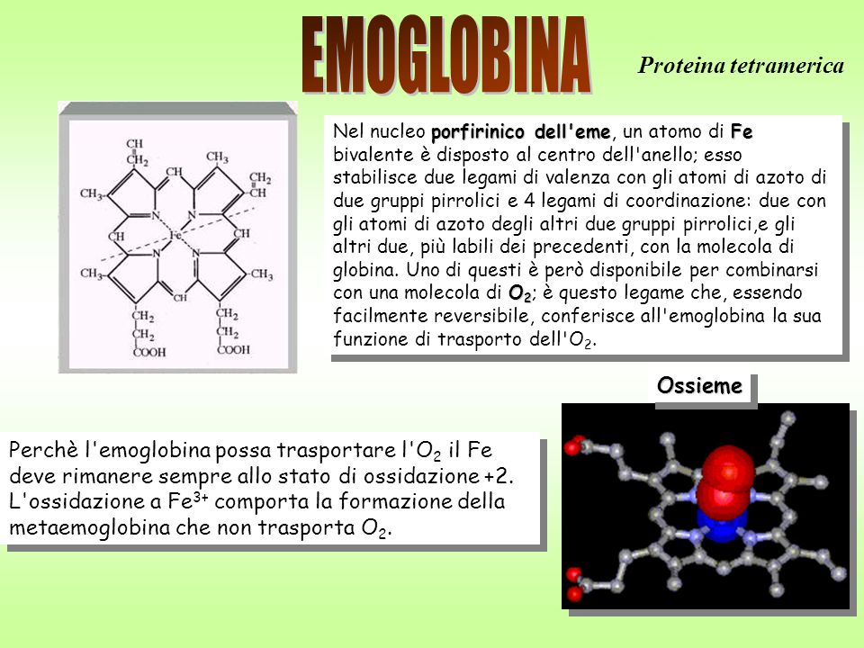 EMOGLOBINA Proteina tetramerica Ossieme