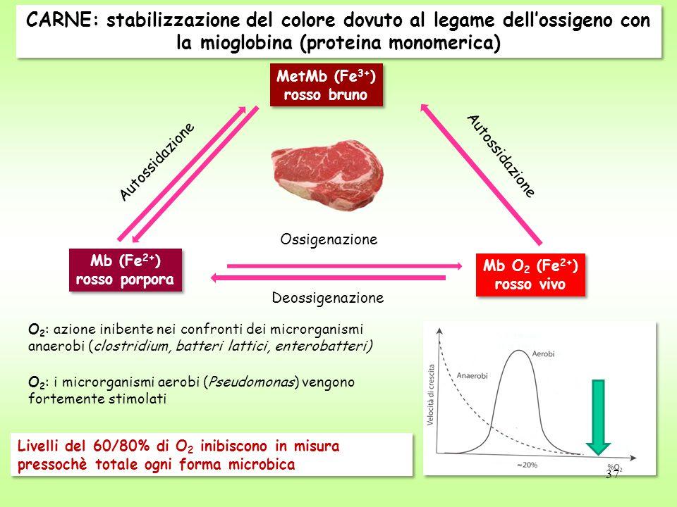 CARNE: stabilizzazione del colore dovuto al legame dell'ossigeno con la mioglobina (proteina monomerica)