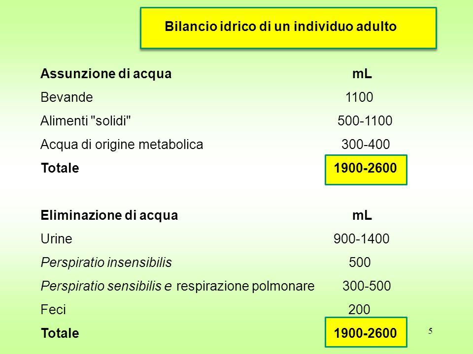 Bilancio idrico di un individuo adulto