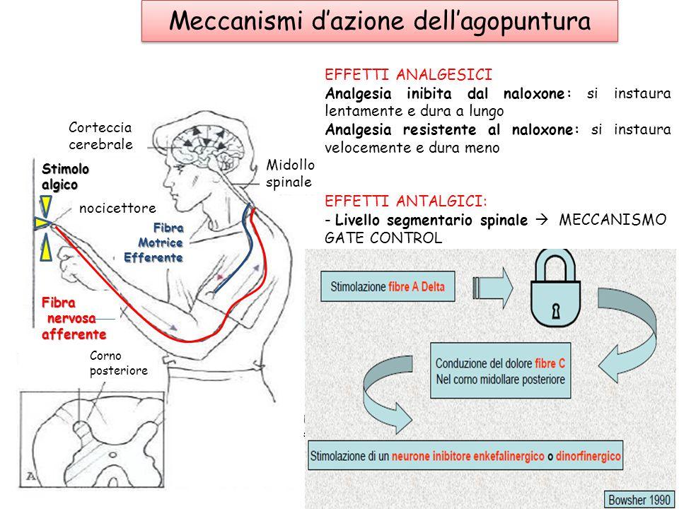 Meccanismi d'azione dell'agopuntura
