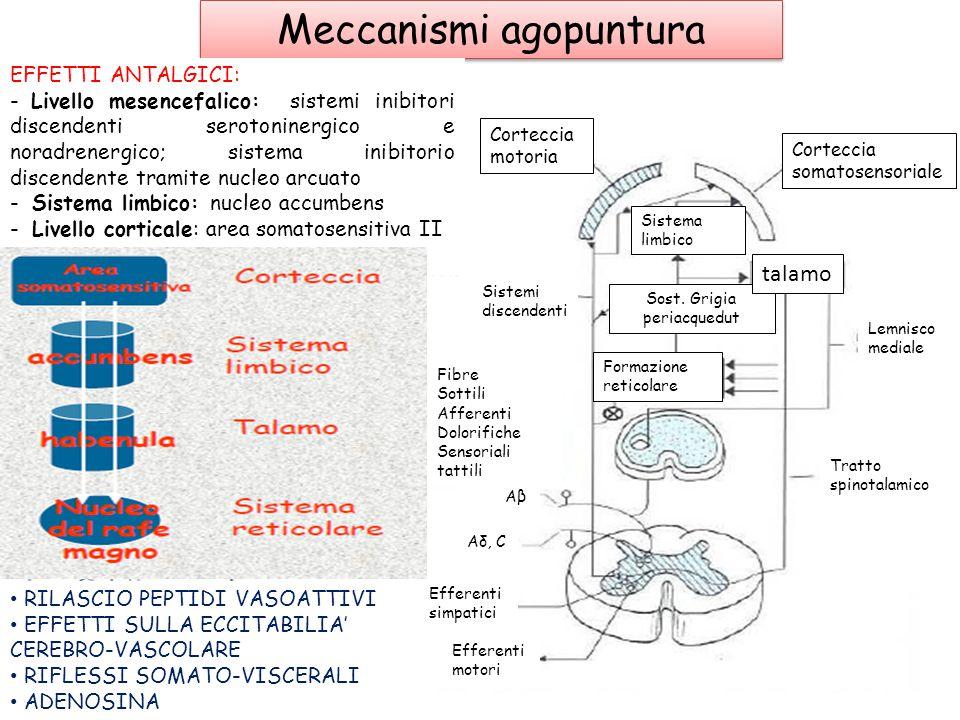 Meccanismi agopuntura