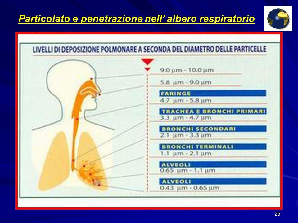 Particolato e penetrazione nell' albero respiratorio