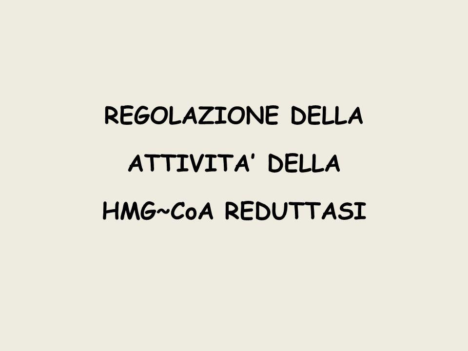 REGOLAZIONE DELLA ATTIVITA' DELLA HMG~CoA REDUTTASI