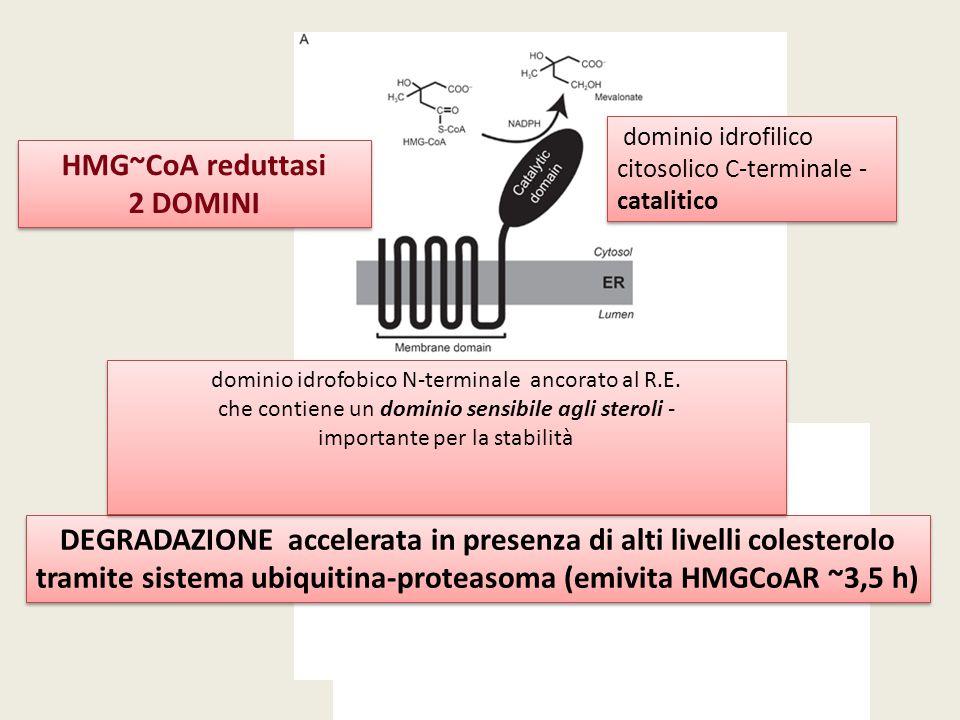 HMG~CoA reduttasi 2 DOMINI