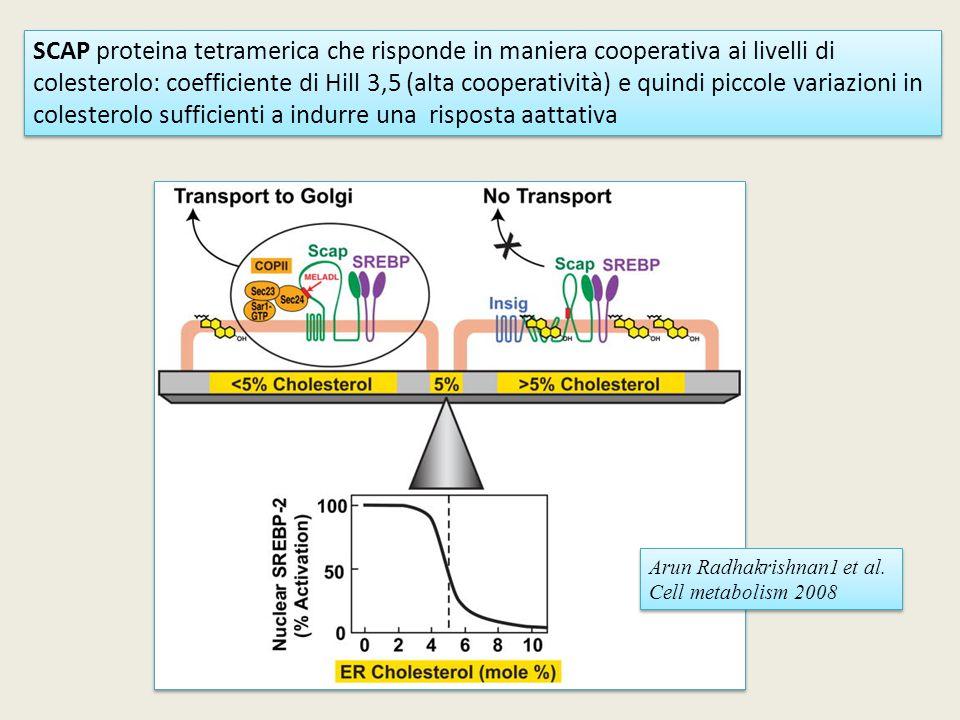 SCAP proteina tetramerica che risponde in maniera cooperativa ai livelli di colesterolo: coefficiente di Hill 3,5 (alta cooperatività) e quindi piccole variazioni in colesterolo sufficienti a indurre una risposta aattativa