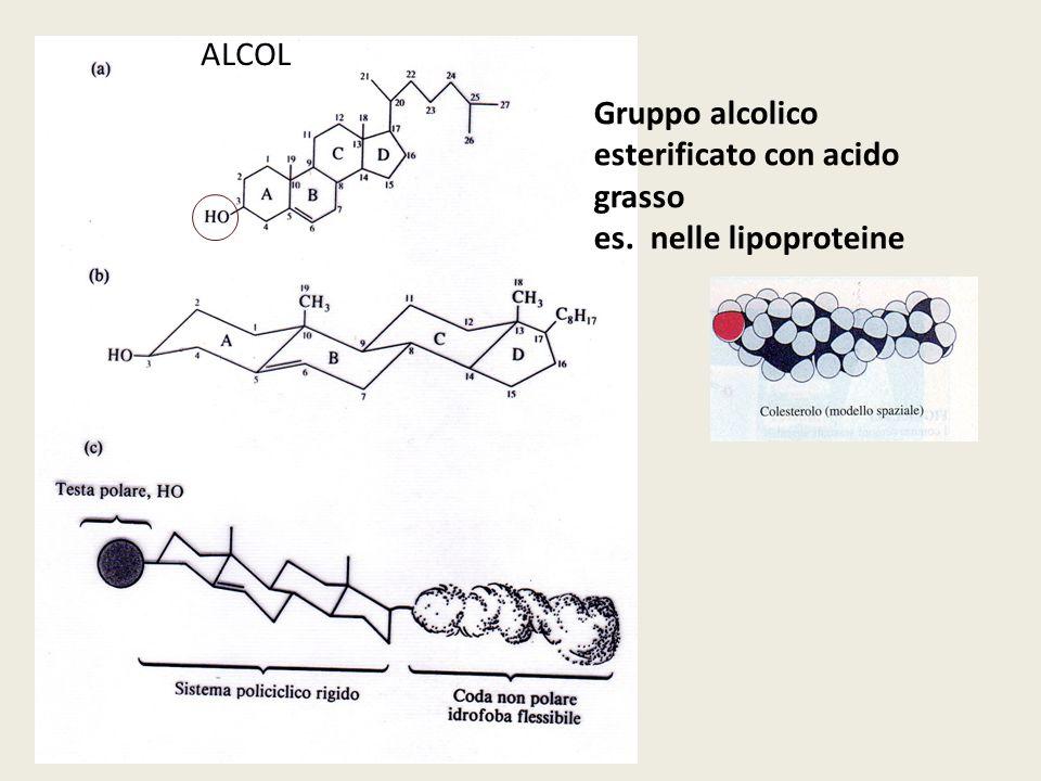ALCOL Gruppo alcolico esterificato con acido grasso es. nelle lipoproteine